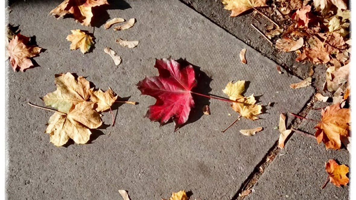 autumn_bologna
